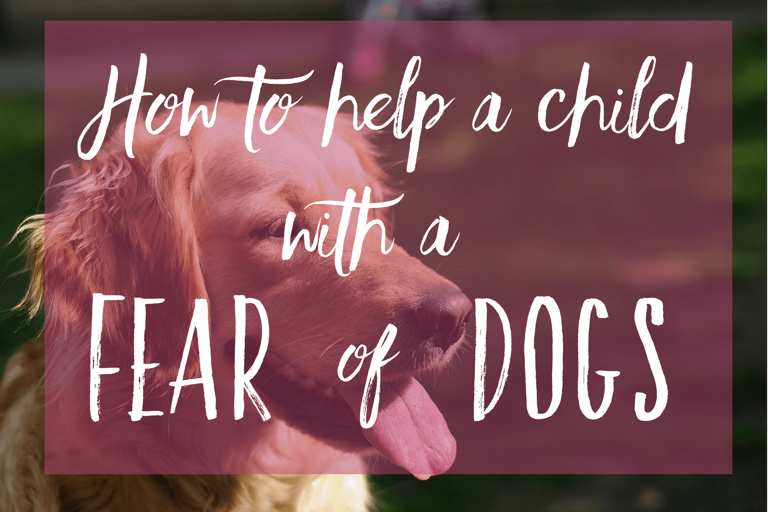 How to help a child with a fear of dogs