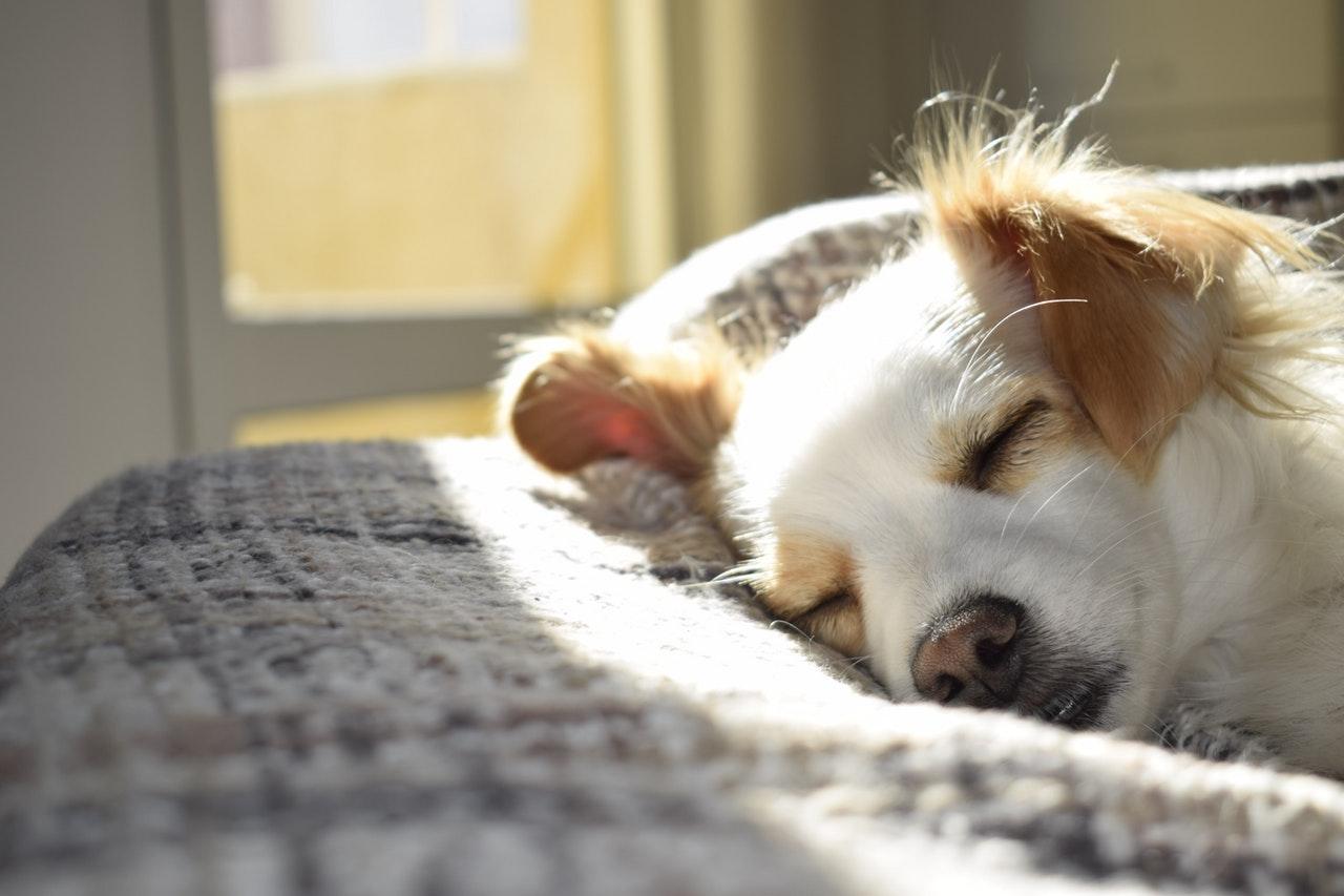 Sleeping dog - a guide to a good night's sleep