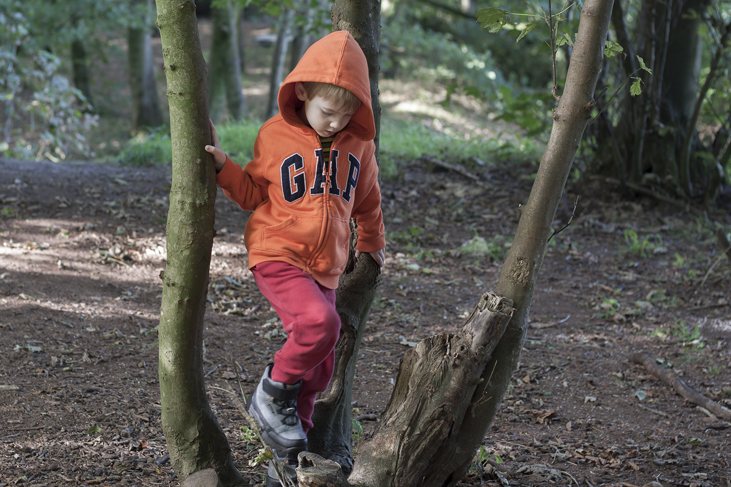 Gabe in a tree at forest school